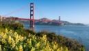 Golden Gate Bridge and yellow wildflowers.